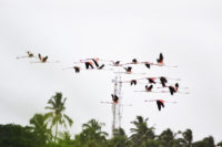 Migratory birds in Vasai-Virar