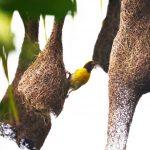 Bird and Animal
